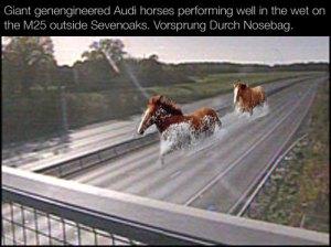 Audi_horseys